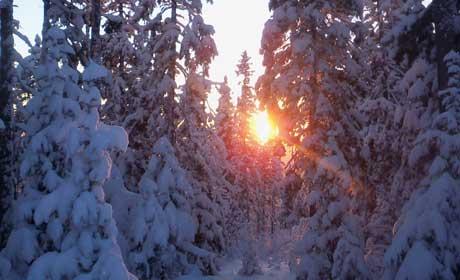 НаПермский край надвигаются морозы до40 градусов