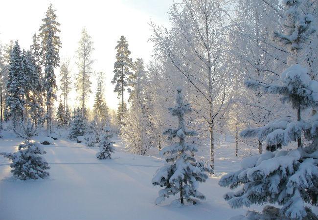 Насевере края предполагается сильный снегопад