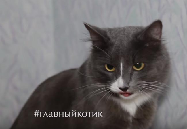 Пермский кот-строитель Барсик вполне может стать главным котом страны