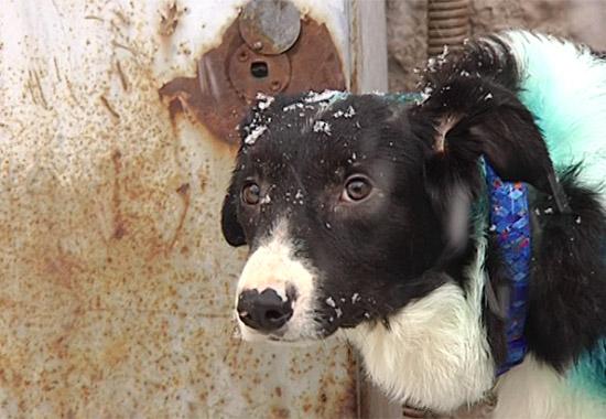 Пофакту насильственной смерти  собак вприюте Перми заведено уголовное дело