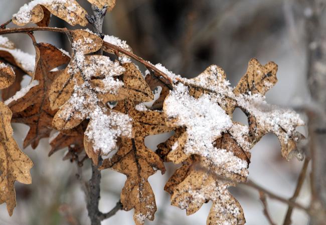 Пермский край ожидает мокрый снег исильные порывы ветра