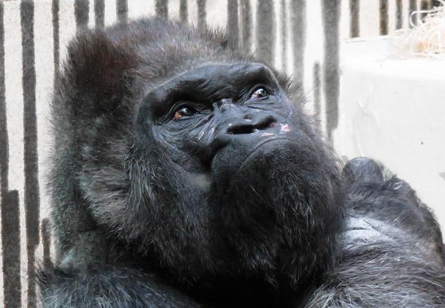 Строители нового зоопарка вПерми безумно отстают отграфика