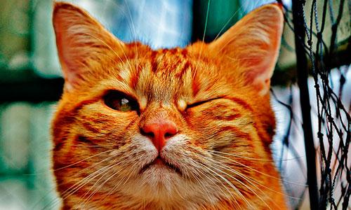Два пермских кота вошли в 10-ку самых легендарных котов 2016 года