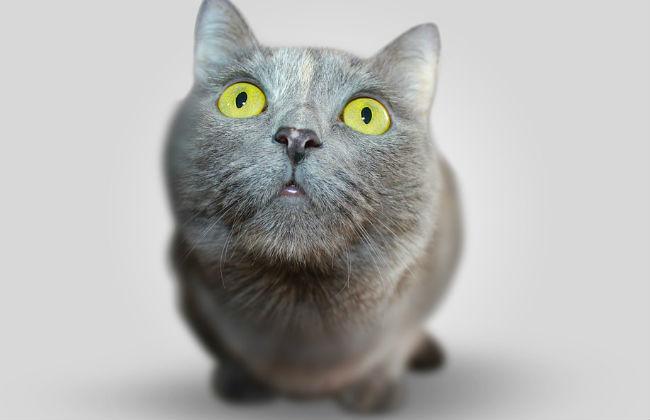ВПрикамье cотрудники экстренных служб вытянули кота, застрявшего вгазовой плите