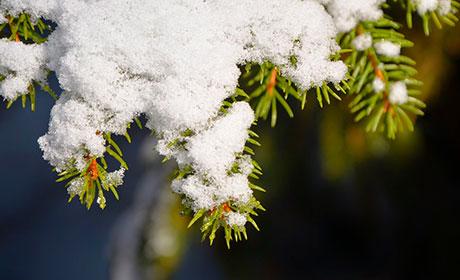 ВПерми поставят новогоднюю ель за758 тыс. руб.