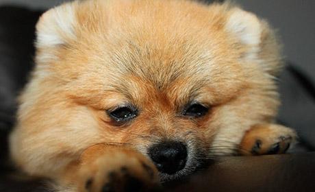 ВПерми водин день случилось два случая нападений бойцовских псов