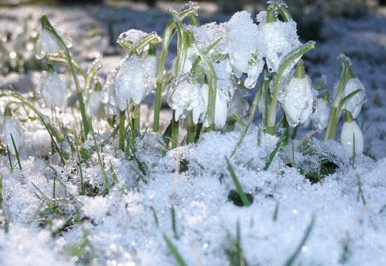 Синоптики: первая декада апреля может оказаться холодной