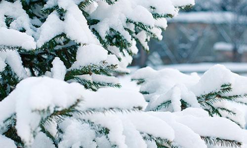Кконцу недели вПермь придут снегопады
