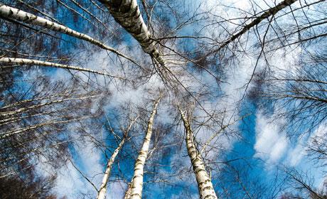 Синоптики предупредили о стремительном похолодании вПрикамье